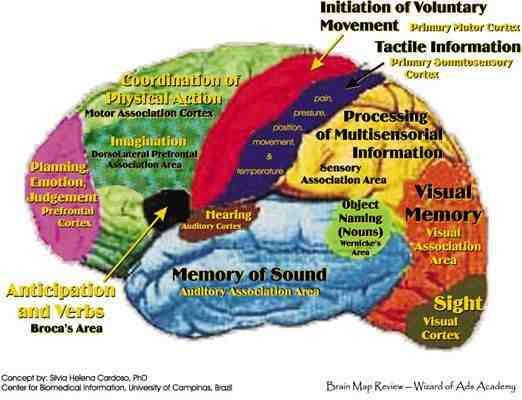 brain-areas-jpg-cf